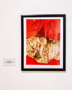 Photo displayed in a gallery by Terry Scholar Olivia Arratia with a bright red background and textured light golden brown fur.